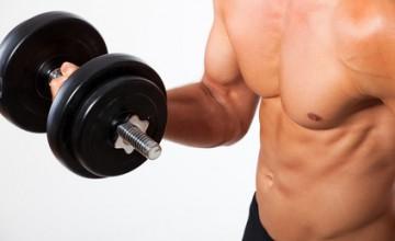 Artikelgebend ist der Trainingsplan für den Muskelaufbau.