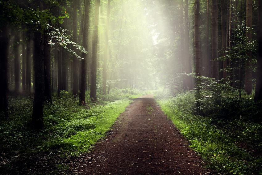 Artikelgebend sind die Trimm-dich-Pfade in deutschen Wäldern.