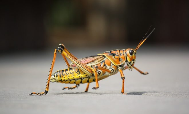 Insekten essen – Grillen und Würmer als Protein-Quelle
